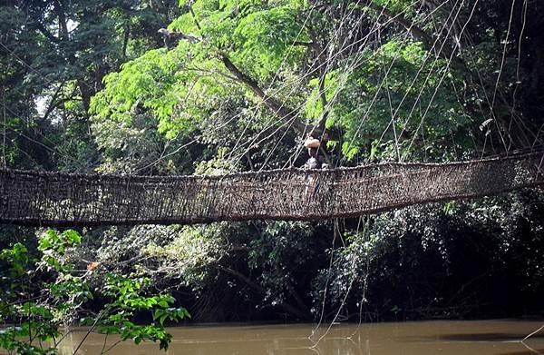 Vine Bridge In Guinea West Africa