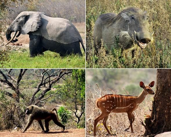 Ghana-Tours-Mole-National-Park